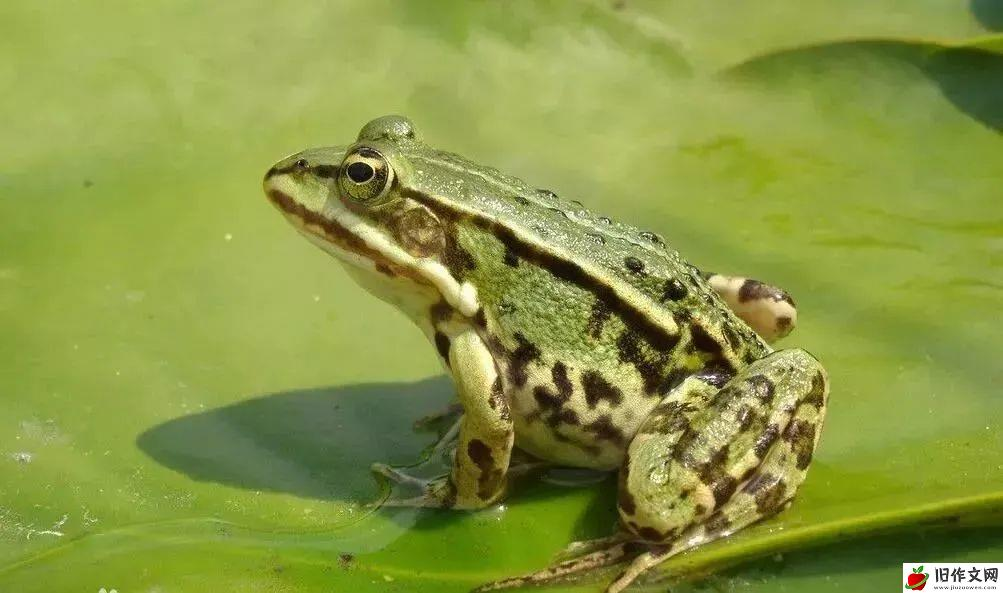 捉青蛙 —— 叙事小学生优秀日记周记暑假趣事作文500字